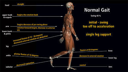 The Science and Biomechanics of Gait