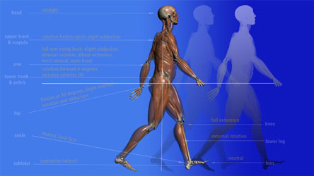 Chapter Details and Course Objectives for this Gait Training Physical Therapy Course