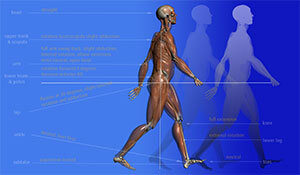 a young lady walking with a detailed anatomical view of her leg and torso musculature